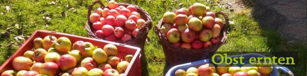 Obst ernten / Nahrungsmittel retten